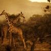 kenya-photography-2-jpg