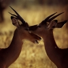kenya-photography-7-jpg