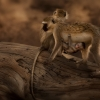 kenya-photography-27-jpg