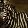 kenya-photography-9-jpg