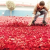 nick-meek-photographs-flower-petals-in-HD-designboom-03